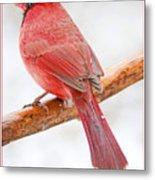 Cardinal Male In Winter Metal Print