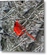 Cardinal On Icy Branches Metal Print