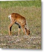 Caribou Fawn Metal Print