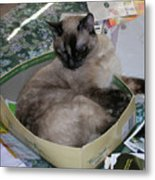 Cat In A Box Metal Print