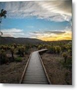 Cholla Cactus Garden, Joshua Tree National Park, Ca Metal Print