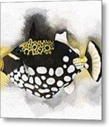 Clown Triggerfish No 01 Metal Print