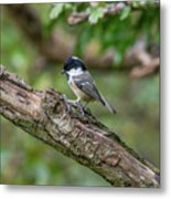 Coal Tit Metal Print