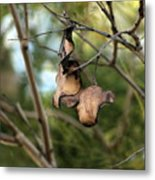 Coffee Brown Pods Metal Print
