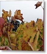 Colchagua Valley Vineyard  Metal Print