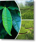 Collage Of  Tea Plantations In Munnar  Metal Print