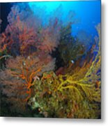Colorful Assorted Sea Fans And Soft Metal Print