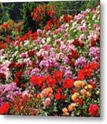Colorful Spring Rose Garden Metal Print