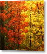 Colors Of Autumn II Metal Print