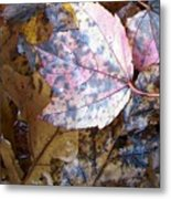 Colors Of The Fall Metal Print