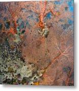 Colourful Sea Fan With Crinoid, Papua Metal Print