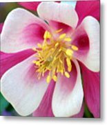 Columbine Flower 1 Metal Print
