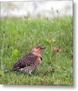 Common Flicker Metal Print