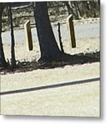Composition Of Trees Metal Print