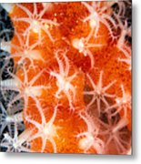 Coral, Close-up Metal Print
