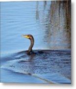 Cormorant In The Marsh Metal Print