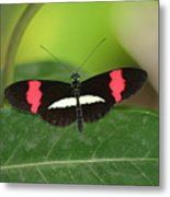 Crimson Patched Longwing Metal Print