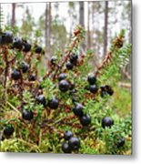 Crowberry Metal Print