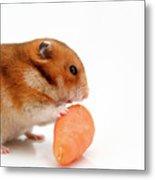 Curious Hamster 1 Metal Print