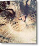 Cute Small Cat Portrait Metal Print
