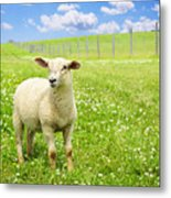 Cute Young Sheep Metal Print