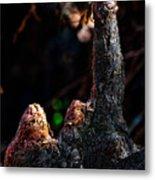 Cypress Knees Metal Print