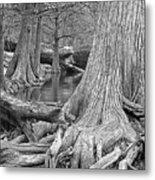 Cypress Trees I V Metal Print