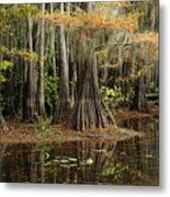Cypress Trees In Caddo Lake Metal Print
