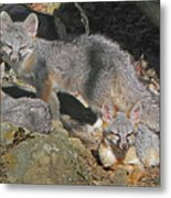 D-a0072 Fox Family On Our Mountain Metal Print