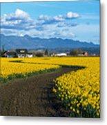 Daffodil Lane Metal Print