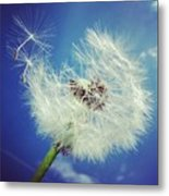 Dandelion And Blue Sky Metal Print by Matthias Hauser