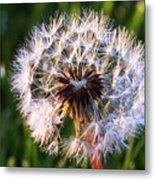 Dandelion In Nature Metal Print