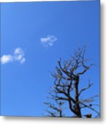 Dead Tree And Two Clouds Metal Print