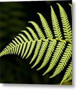 Detail Of Asian Rain Forest Ferns Metal Print