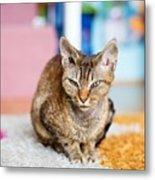Devon Rex Purebred Domestic Cat Metal Print