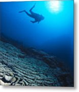 Diving Scene Metal Print