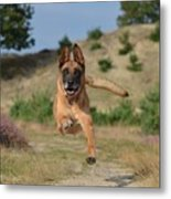Dog Leaping Metal Print