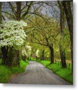 Dogwood Trail, Smoky Mountain, Tennessee Metal Print
