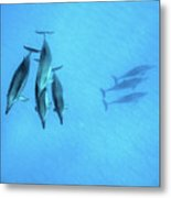 Dolphins At Rest Metal Print