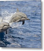 Dolphins Leaping Metal Print by Dave Fleetham - Printscapes