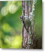 Downy Woodpecker In The Wild Metal Print