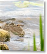 Dragonfly Flying Metal Print