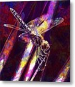 Dragonfly Insect Close  Metal Print