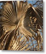 Dried Palm Fronds Metal Print
