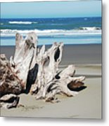 Driftwood On Beach Metal Print