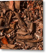 Dryness Metal Print