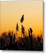 Dusk Over The Pond Metal Print
