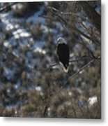 Eagle In Tree Metal Print