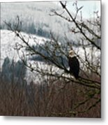 Eagle Watching Metal Print