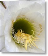 Easter Lily Cactus Metal Print